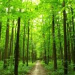 Qu'est-ce que le développement durable?