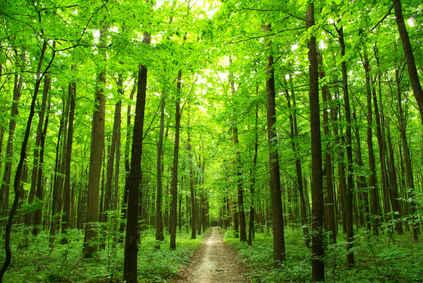 sentier forêt nature developpement durable