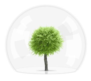 arbre qui pousse à l'abri d'une cloche en verre.