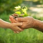Quel est le bilan à tirer 5 ans après le Grenelle de l'environnement ?