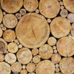 Des cellules solaires à base de bois