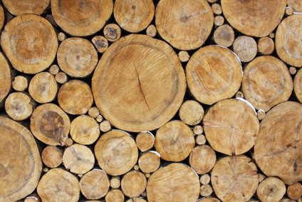 buches de bois