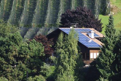 panneaux solaires arbres