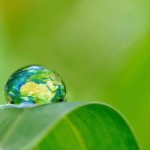 Micro-algues et eaux usées : une nouvelle source d'énergie!