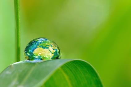 Micreo-algues et eaux usées