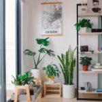 4 conseils pour une maison saine