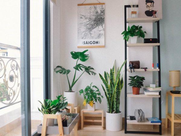 interieur sain avec decorations et plantes