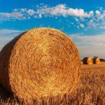Isolation écologique: quels matériaux choisir?